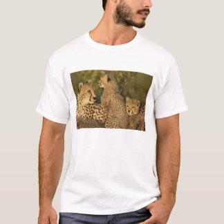 Gepard, Acinonyx jubatus, oberes Mara, Masai T-Shirt