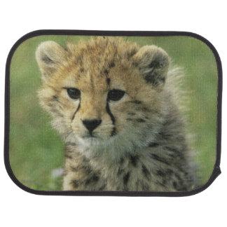 Gepard, (Acinonyx jubatus), Tansania, Serengeti Automatte