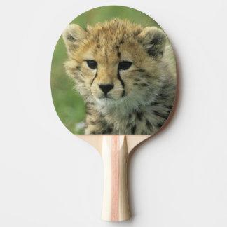 Gepard, (Acinonyx jubatus), Tansania, Serengeti Tischtennis Schläger