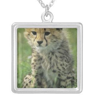 Gepard, (Acinonyx jubatus), Tansania, Serengeti Versilberte Kette