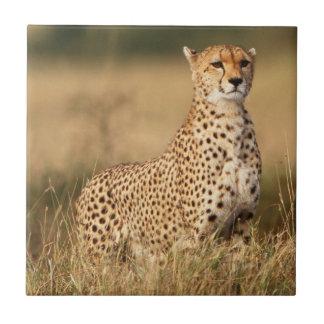 Gepard auf kleinem Hügel für bessere Sicht Fliese