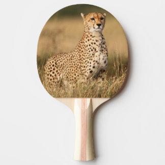 Gepard auf kleinem Hügel für bessere Sicht Tischtennis Schläger