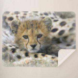 Gepard CUB Sherpadecke