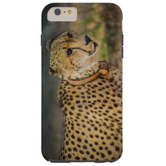Gepard-Druck-Stellen Tough iPhone 6 Plus Hülle
