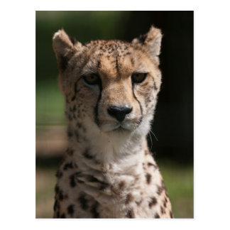 Gepard im Dschungel Postkarte