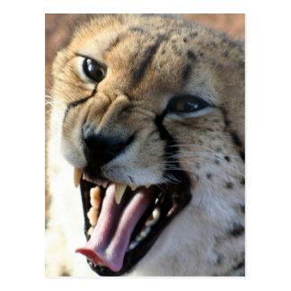 Gepard-Knäuel-Postkarten Postkarte