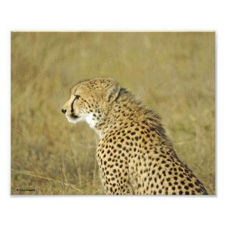 Gepard-Porträt Photo Drucke