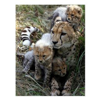 Gepard Postkarte