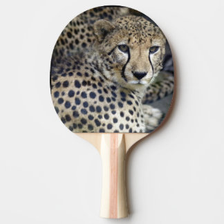 Gepard Tischtennis Schläger