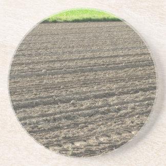 Gepflogenes Feld Ende des Nachmittages in Toskana Sandstein Untersetzer