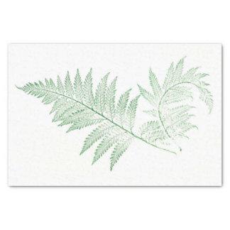 Gepresstes Farn-Blätter Seidenpapier