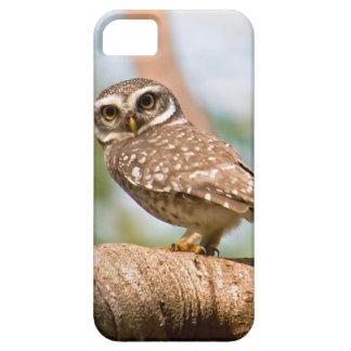 Gepunktete Eule auf Morgenflug iPhone 5 Case