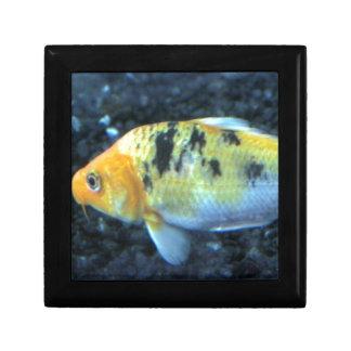 Gepunkteter Goldfish Geschenkbox