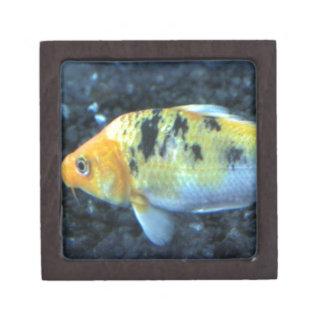 Gepunkteter Goldfish Schmuckkiste