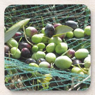 Gerade ausgewählte Oliven auf dem Netz während der Getränkeuntersetzer
