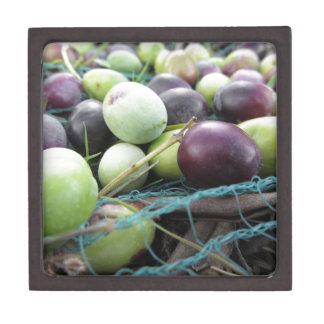 Gerade ausgewählte Oliven auf dem Netz während der Kiste