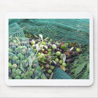 Gerade ausgewählte Oliven auf dem Netz während der Mousepad