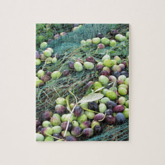 Gerade ausgewählte Oliven auf dem Netz während der Puzzle