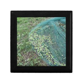 Gerade ausgewählte Oliven auf dem Netz während der Schmuckschachtel