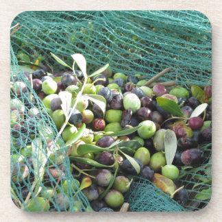 Gerade ausgewählte Oliven auf dem Netz während der Untersetzer