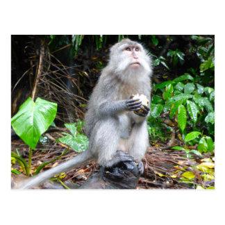 Gerade herum Monkeying Postkarte