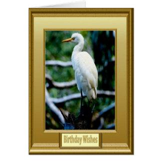 Gerahmter weißer Vogel Karte