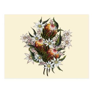 Geraldton Wachs, Flanell-Blumen, Banksia Postkarte