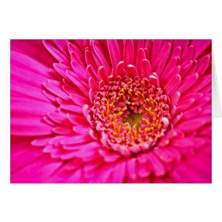 Gerbera-Blume Karte