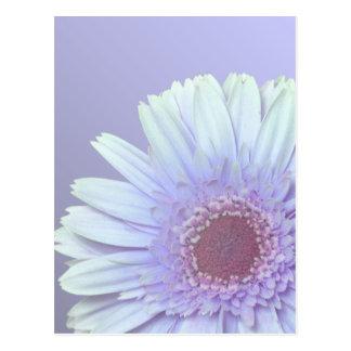 Gerbera-Gänseblümchen Postkarte