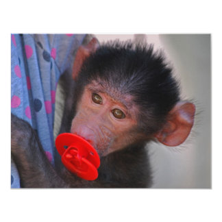 Geretteter Baby-Affe mit einer Attrappe Karte