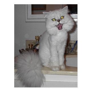 Gesang-Kätzchen Postkarte