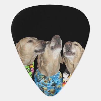 Gesang-Labrador-Gewohnheits-Plektrum Plektron
