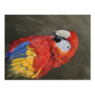 Geschenke für den Papageienliebhaber. Scharlachrot Postkarte