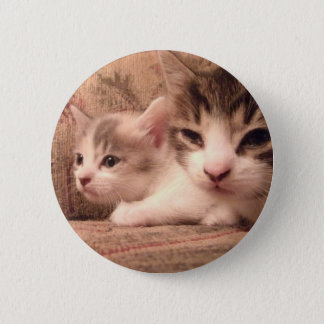 Sibling Kitties
