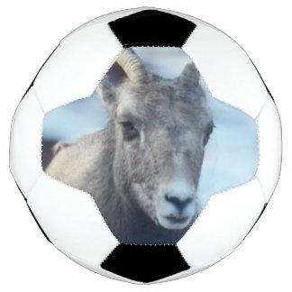 Gesicht eines Bighorn-Schafs Fußball