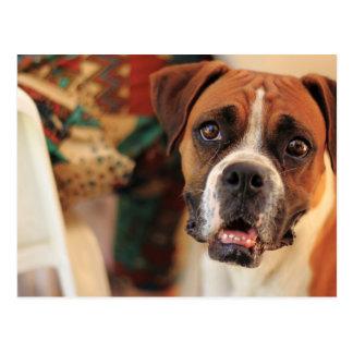 Gesichtsweinen des Boxers des freundlichen Postkarte