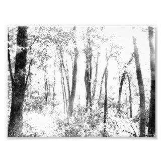 Gespenstischer Wald Fotodrucke