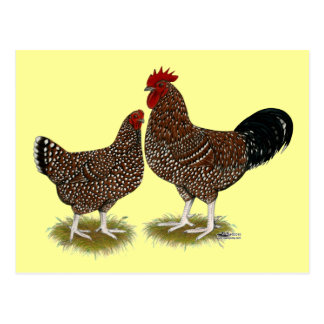Gesprenkelte Sussex-Hühner Postkarte
