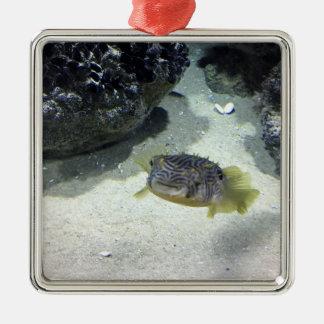 Gestreifter Burrfish Quadratisches Silberfarbenes Ornament