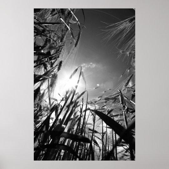Getreide Schwarz Weiß Poster