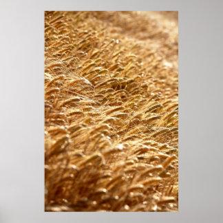 Getreidefeld Poster