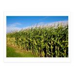 Getreidefeld und Himmel Postkarte