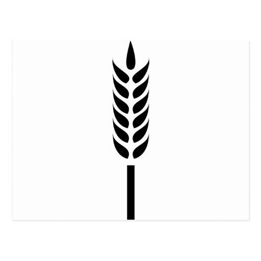 Getreideweizenspitze Postkarte