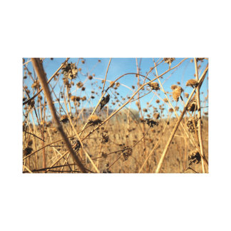 Getrocknete Sonnenblumen Leinwanddruck