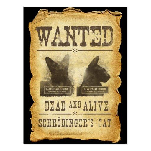 Gewollte Tote und lebendig.  Schroedingers Katze Postkarte