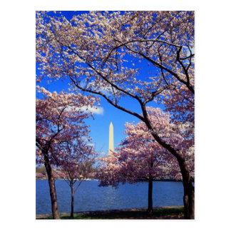 Gezeiten- Becken-Kirschblüten Postkarte