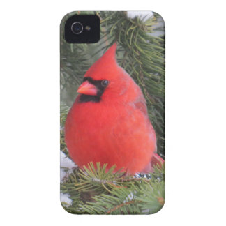 Gezierter Kardinal iPhone 4 Cover