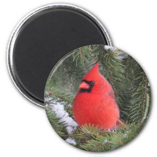 Gezierter Kardinal Runder Magnet 5,1 Cm