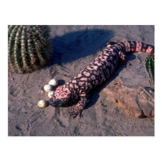 Gila-Krustenechse-Eidechse, die Wüsten-Wachteleier Postkarten