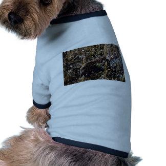 Gila-Krustenechse Hundbekleidung